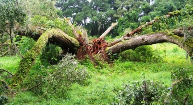 heart-of-tree-0713