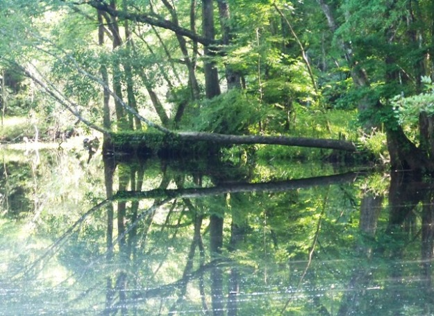 morning-at-natural-bridge-battle-0613