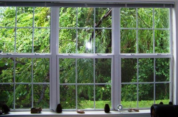 window-branch-090616