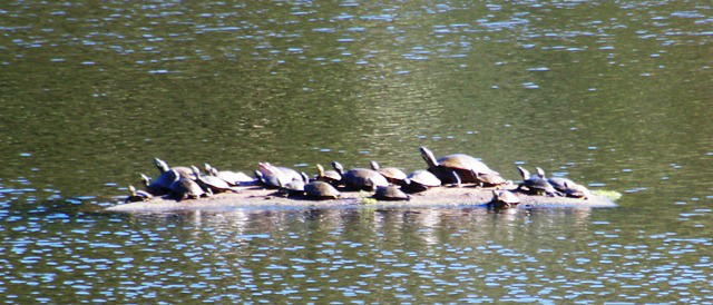 turtle-row-in-fall-1013