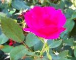 the-blossom-0814